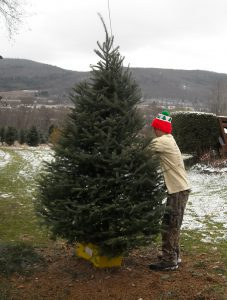Services available Lundins Tree Farm Directions