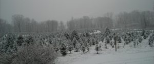 Winter at Lundins Tree Farm